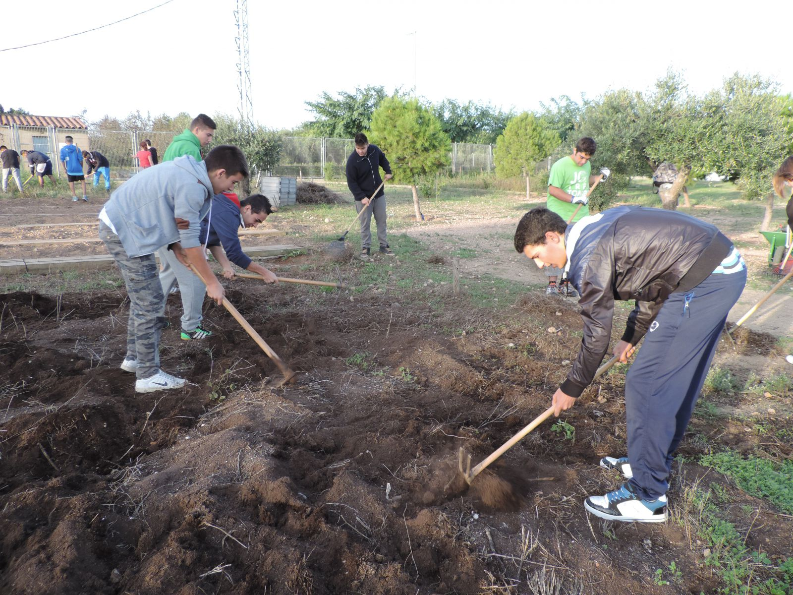 PTT Auxiliar viveros y jardines